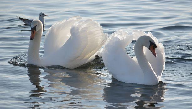 Photo free birds, white, colors