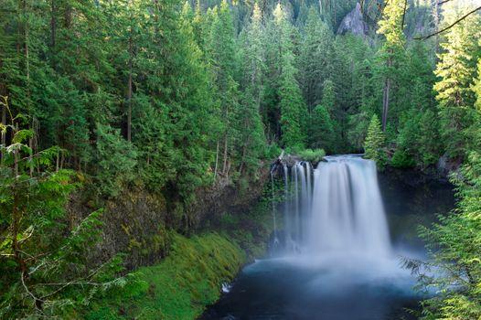 Фото бесплатно Koosah Falls, Willamette National, Линн Каунти