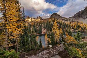 Photo free landscape, flowers, autumn