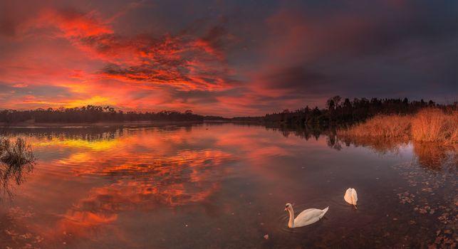Фото бесплатно закат, лебеди, озеро
