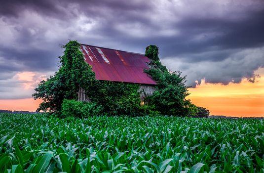 Фото бесплатно закат, кукурузное поле, домик