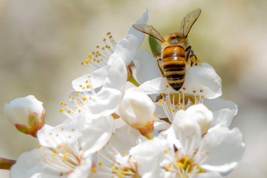 Фото бесплатно пчелы, насекомые, весна