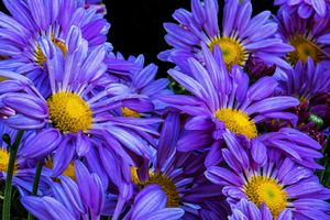 Photo free flowers, floral, floral composition
