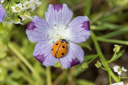 Фото бесплатно цветы, божья коровка, насекомые