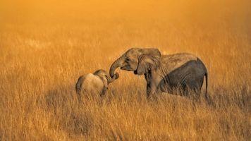Бесплатные фото африка,дикая природа,природа,животные,слон