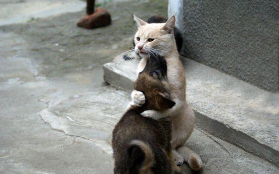 Photo free cat, animals, mustache
