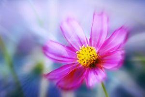 Фото бесплатно цветок, космос, красиво
