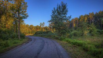 Бесплатные фото Московская область, Россия, Подмосковье, дорога, закат, лес, деревья