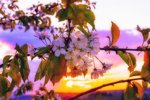 Photo free sunset, flowers, spring