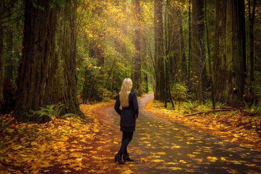 Photo free girl, landscape, forest
