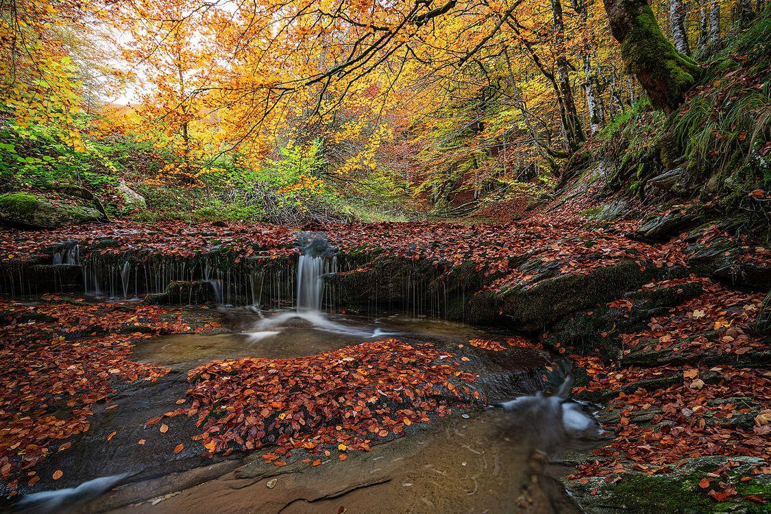 Фото бесплатно осень, лес, водопад - на рабочий стол
