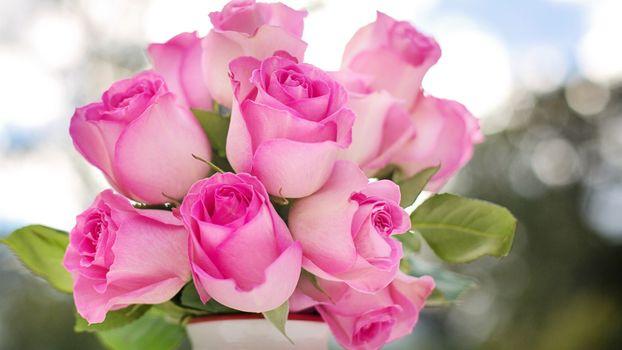 Photo free pink roses, vase, boke