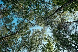 Фото бесплатно растение, осень, лесной массив