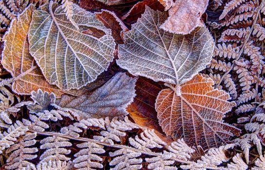 Photo free autumn, autumn leaves, hoarfrost