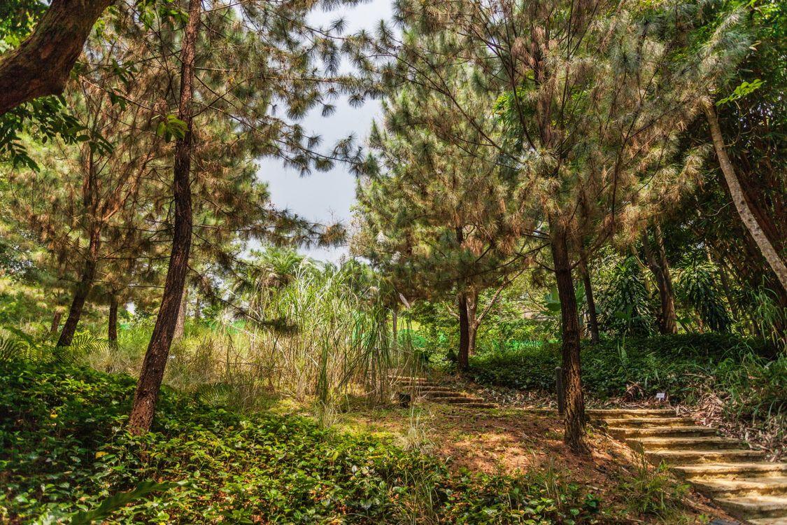 Фото природа лето тропинка - бесплатные картинки на Fonwall