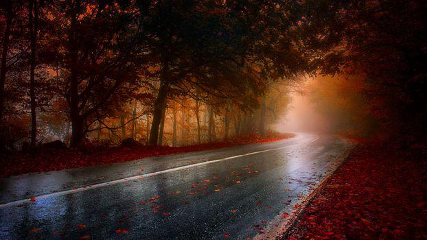 Photo free nature, road, leaf