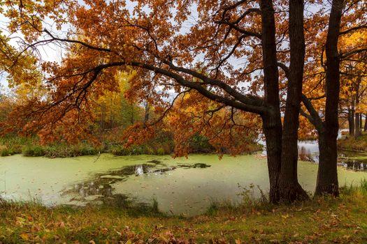 Озеро Заболоченное