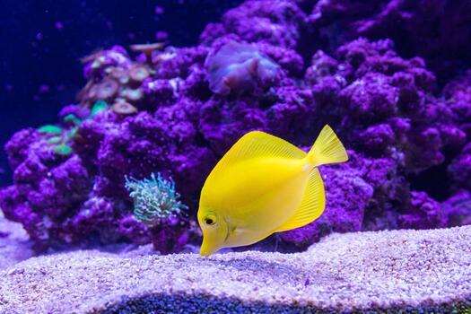 Photo free yellow fish, underwater, aquarium