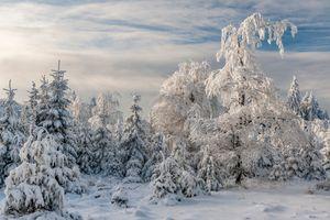 Фото бесплатно зима, снег, деревья, сугробы, лес, природа, пейзаж