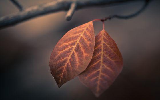 Заставки осень, листья, увядший