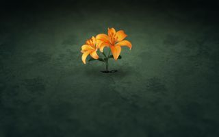Photo free flowers, simple background, minimalism