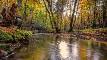 Бесплатные фото лес,деревья,река,осень,природа