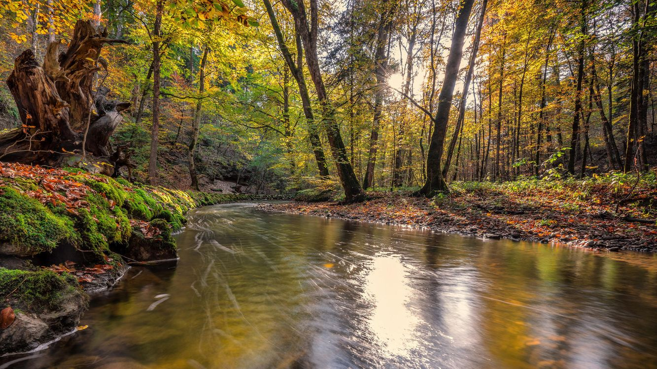 Обои лес, деревья, река картинки на телефон
