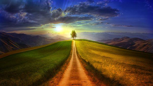 Photo free lone tree, path, clouds