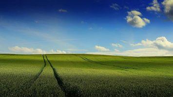Фото бесплатно поле, колосья, небо