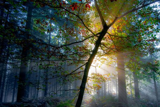 Фото бесплатно солнечный свет, природа, туман