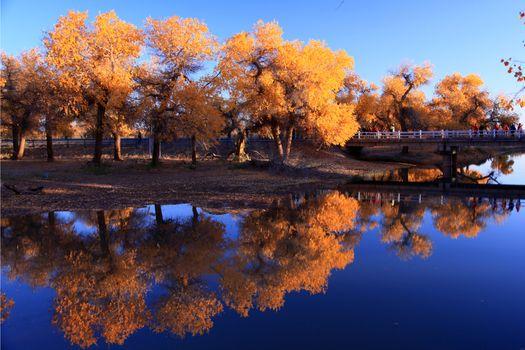 Фото бесплатно осень, природа, отражение