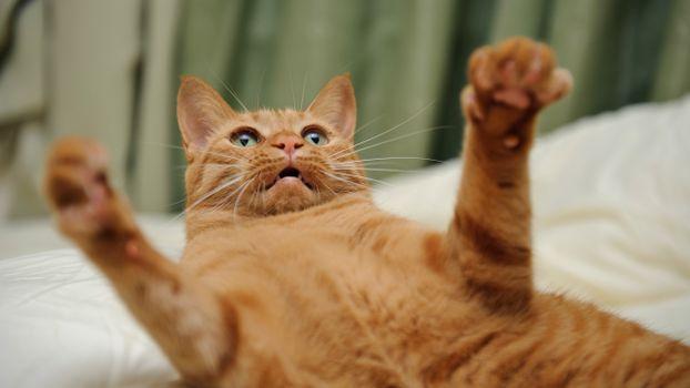 Photo free cat, mustache, kitten