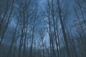 Бесплатные фото деревья,туман,небо,trees,fog,sky