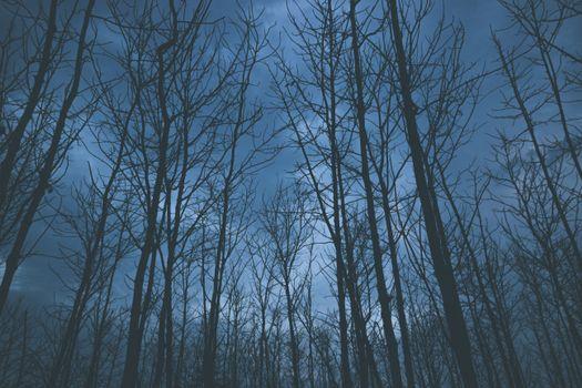 деревья, туман, небо, trees, fog