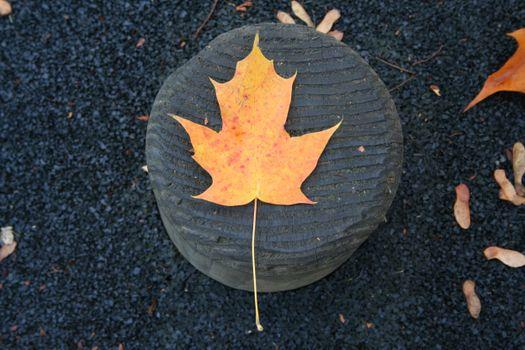 Фото бесплатно лист, дерево, природа