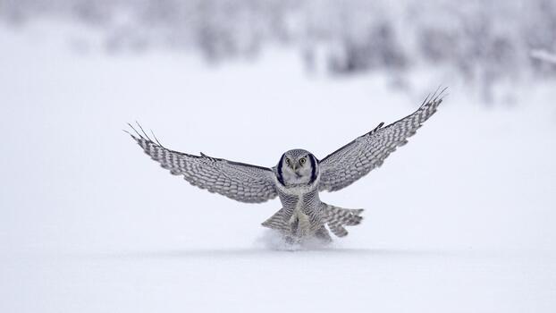 Photo free wings, snow, bird of prey
