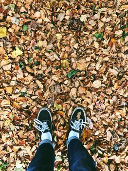 Leaf and sneakers