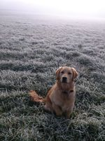 Фото бесплатно зима, роса, туман