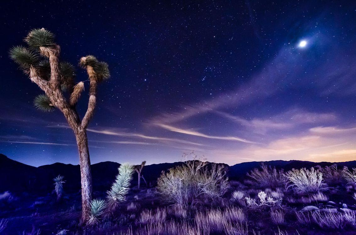Фото бесплатно Joshua Tree National Park, California, ночь, свечение, сияние, дерево, пейзаж, пейзажи