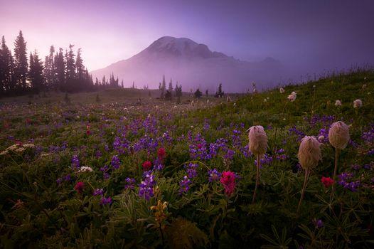 Photo free Mount Rainier, field, sunset