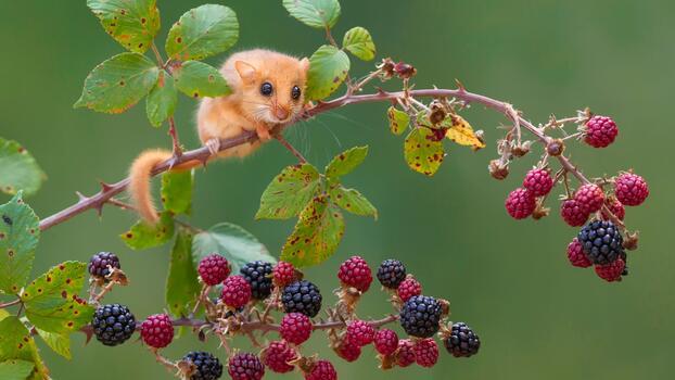 Photo free animals, nature, funny