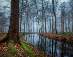 Фото бесплатно лес, канал, туман