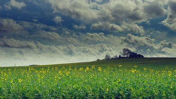 Бесплатные фото поле,холмы,цветы,деревья,облака,пейзаж