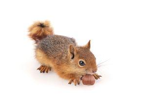 Фото бесплатно белки, орехи, белый фон