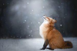 Лиса наслаждается падающим снегом