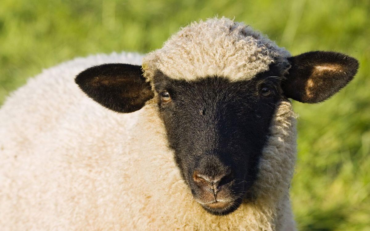 Фото лицо дикая природа шерсть - бесплатные картинки на Fonwall