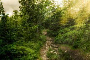 Фото бесплатно путь, закат, деревья