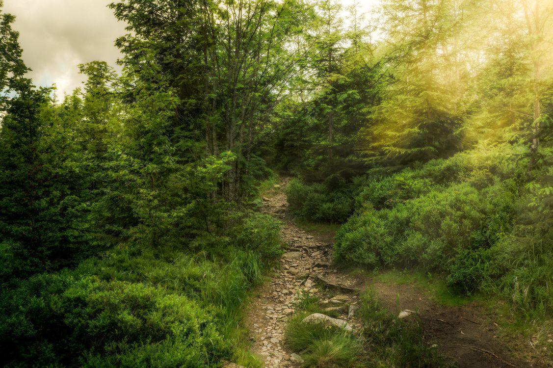 Фото бесплатно путь, закат, деревья - на рабочий стол
