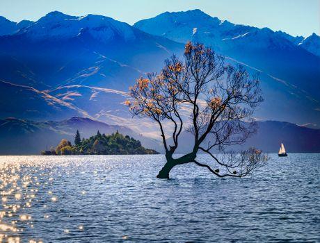 Photo free the Wanaka tree, lake Wanaka, New Zealand