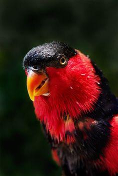 Фото бесплатно попугай, клюв, макро
